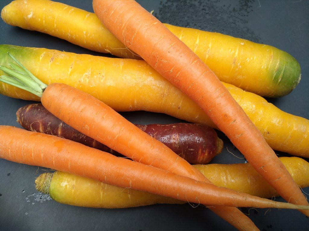 frische Karotten orange, gelb, violett